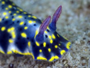 REMARKABLE RHINOPHORES